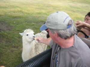 man feeding llama
