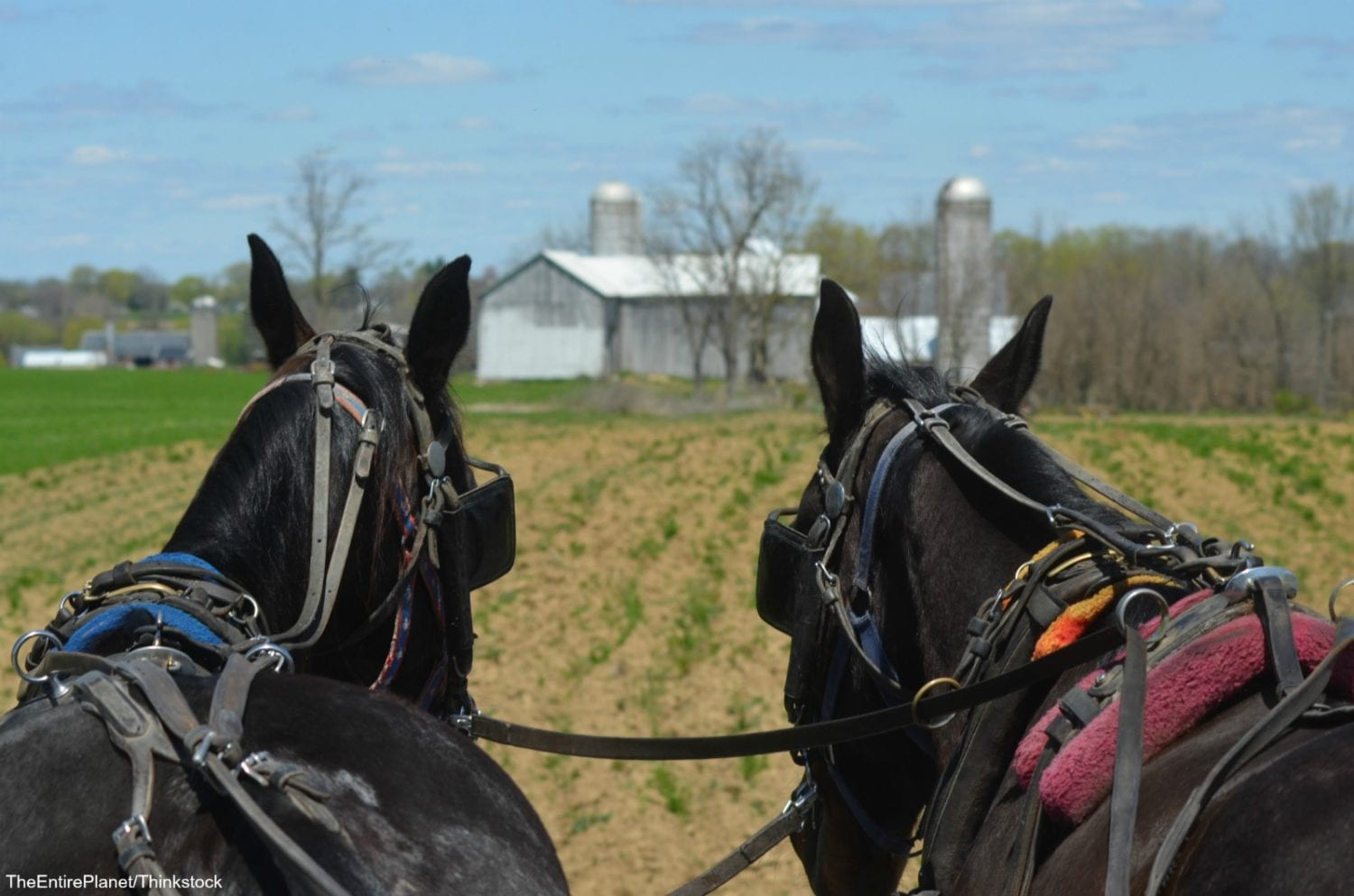 Horse and Buggy Ride Through Amish Country