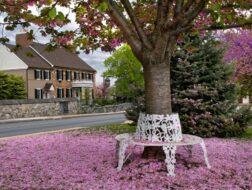 Smithton in Springtime