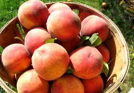 Mouthwatering Breakfasts: Peach Sour Cream Muffin Recipe, Historic Smithton Inn